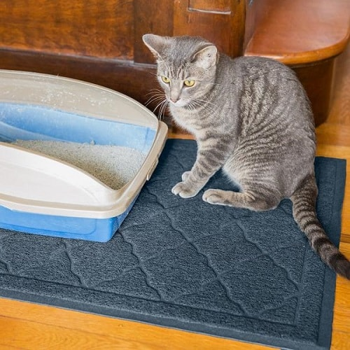 Cat with Best Cat Litter Mats