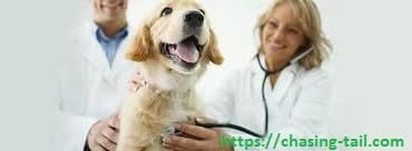 Best Heartworm Treatment For Dogs