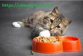 Cat And The Best Canned Cat Food