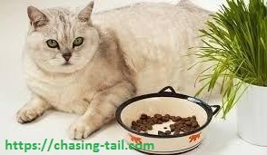 Fat Cat with The Food For Weight Loss