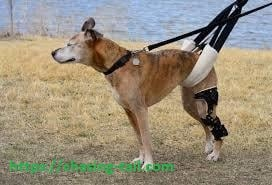 Dog need The Best Joint Supplements For Dogs