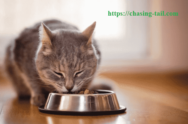 Cat With The Best Low Protein Cat Food