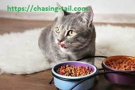Cat With The best cat food for indoor cats